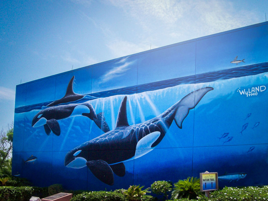 South Padre Island orca whales mural