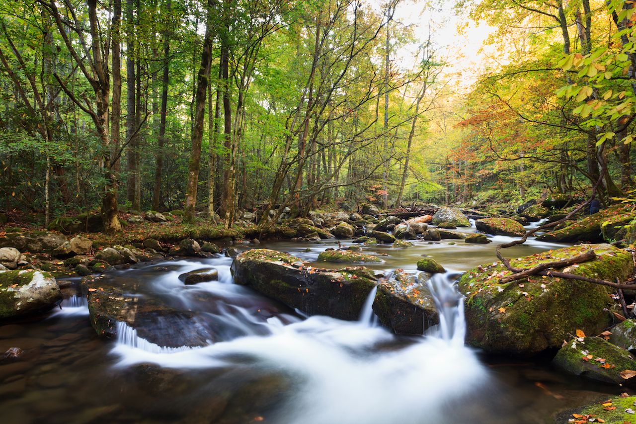 Stream in fall colors, the great smokey mountains national park